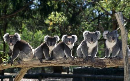 Camper mieten Australien - Unser deutschsprachiges Team ist für dich da