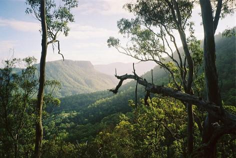 Der Daintree Regenwald ist atemberaubend! Ein paar Tage sollte man auch hier verbringen!