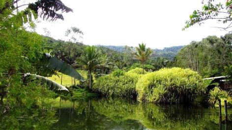 Free Cairns Botanic Gardens