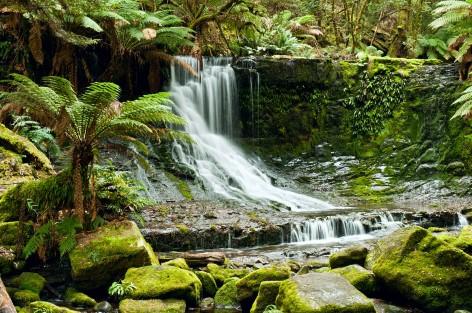 Der australische Regenwald hat viel zu bieten