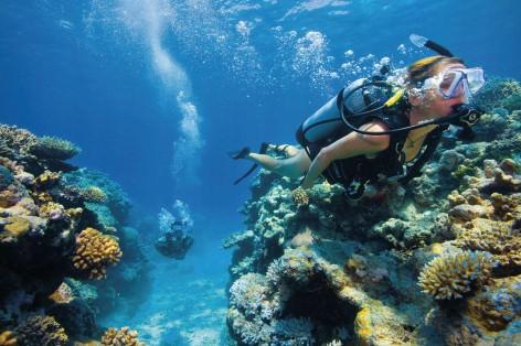 Das Great Barrier Reef liegt nur eine Stunde Bootsfahrt von Port Douglas entfernt