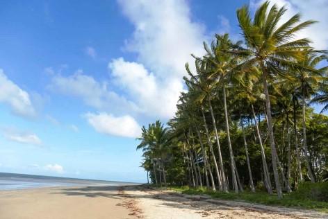 Port Douglas - Strand, Palme, Meer - Was braucht man mehr?