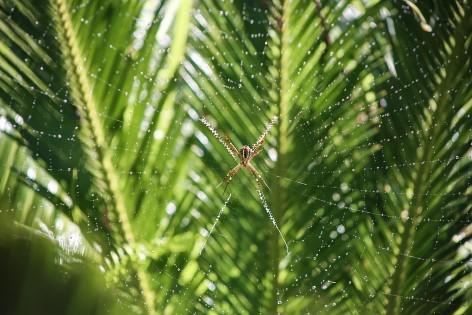 Spinnen in Australien