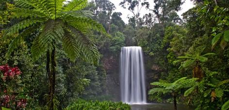 Millaa Millaa Falls - Der bekannteste Wasserfall Australiens