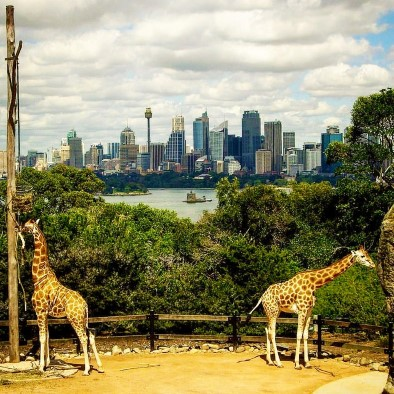 Zu den besten Zoos in Australien gehört der Sydney Taronga Zoo