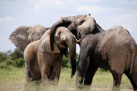 Fahre mit dem Fahrrad entlang wilder Tiere Afrikas