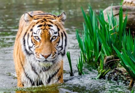 Ein Wildnispark der besonderen Art