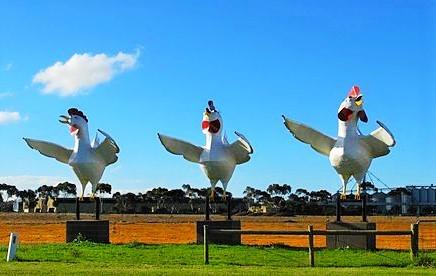Wie die verrückten Hühner auf der Stange...