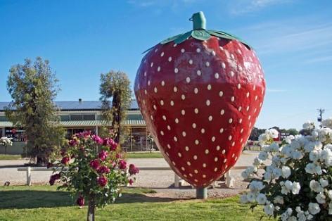 Die Giganten Australiens: Die Monster-Erdbeere