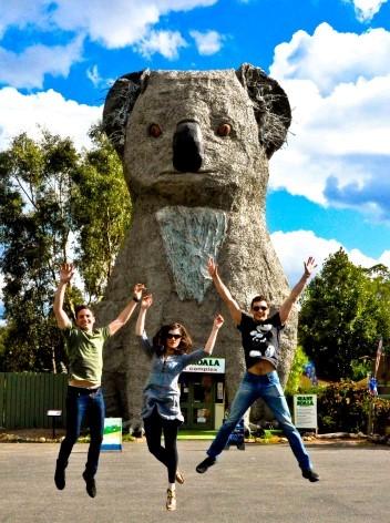 Der gigantische Koala