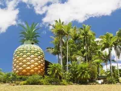 Die Giganten Australiens: Die größte Ananas der Welt