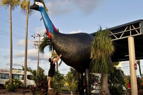 Der große Kasuar Laufvogel