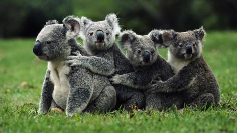 """Das Koalakrankenhaus hat freien Eintritt - Komm und sag """"Hallo"""""""