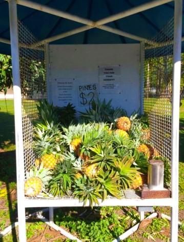Frische Ananas direkt von der Farm