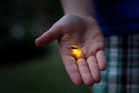 Glühwürmer in Australien