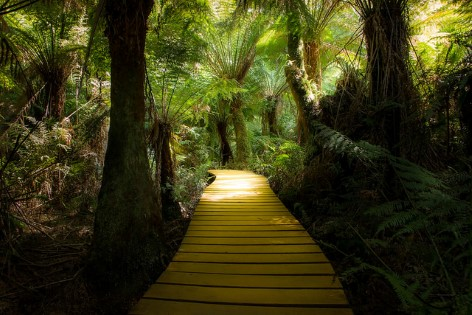 Mait's Rest ist ein wunderschöner Wanderweg durch den Otway National Park