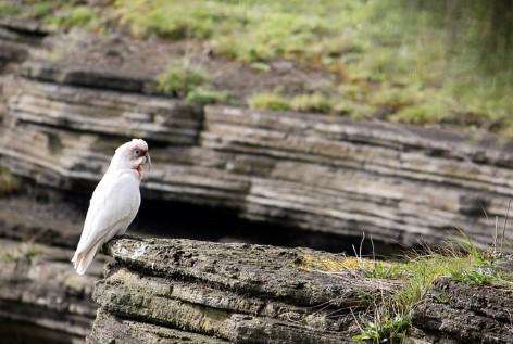 Tower Hill Wildlife Reserve - Ein schöner Ort für Tierliebhaber