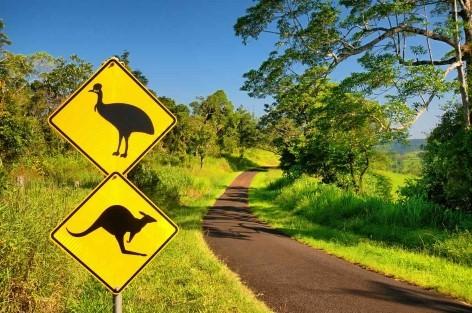 Kostenlose Reiseführer für Australien - Daintree Rainforest