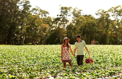 Phillip Island Reise: Beeren pflücken ist ein riesen Spaß für Groß und Klein!