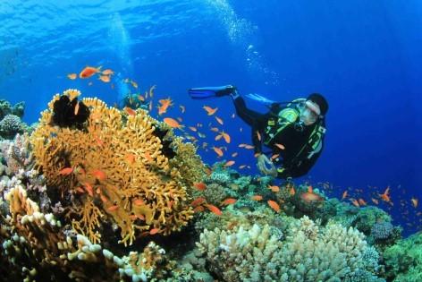 Das Great Barrier Reef ist hervorragend von Cairns aus zu erreichen und eines der besten Tipps unserer kostenlosen Reiseführer für Australien
