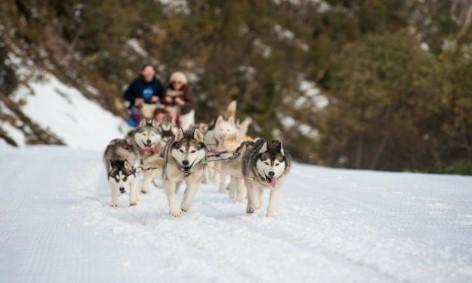 Schlittenfahrt mit Huskies auf der Melbourne nach Sydney Reise