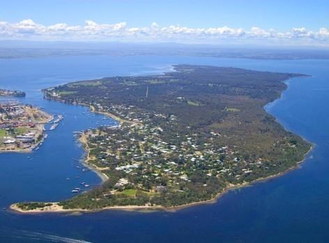 Raymond Island - Super Ort, um Koalas zu beobachten